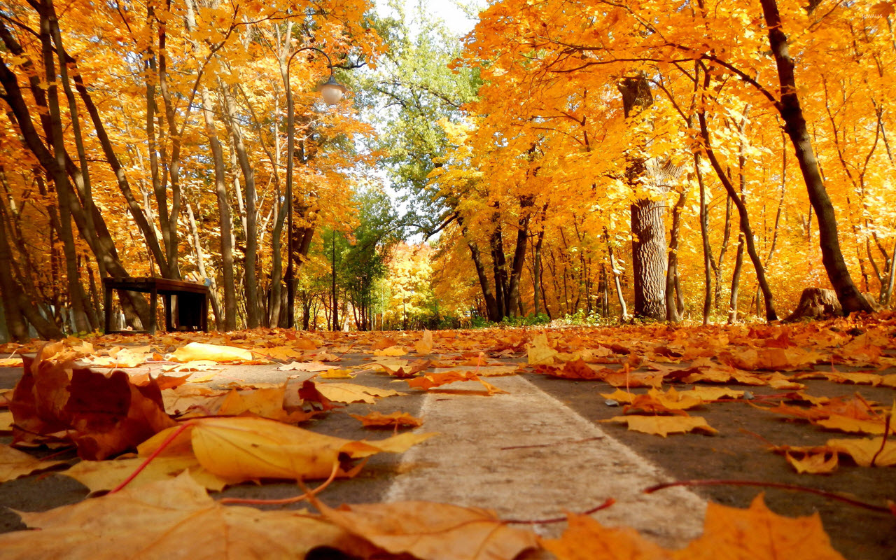 Copy of autumn-leaves-on-the-pavement-39608-2560x1600