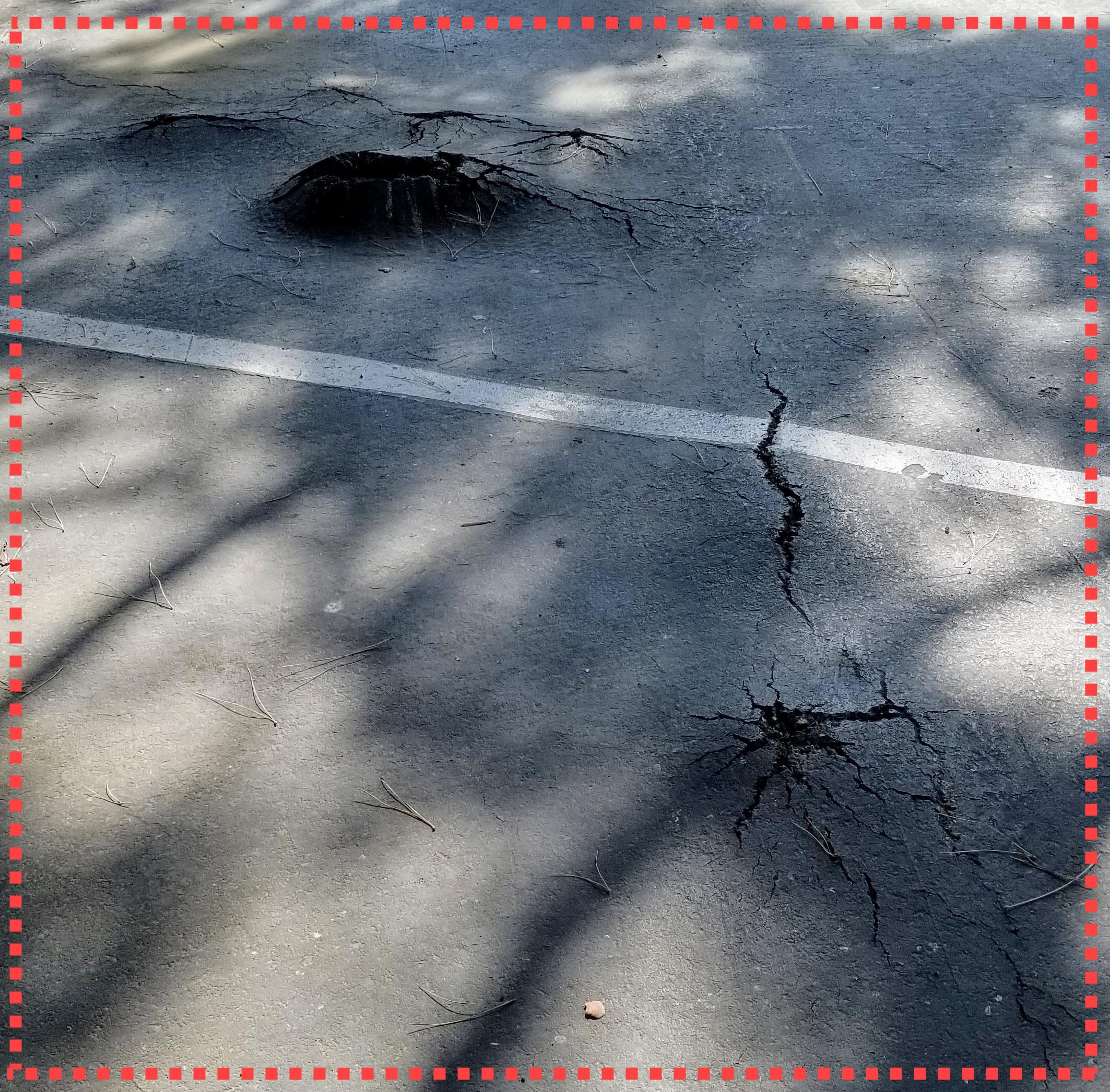 Roots Damaging Asphalt