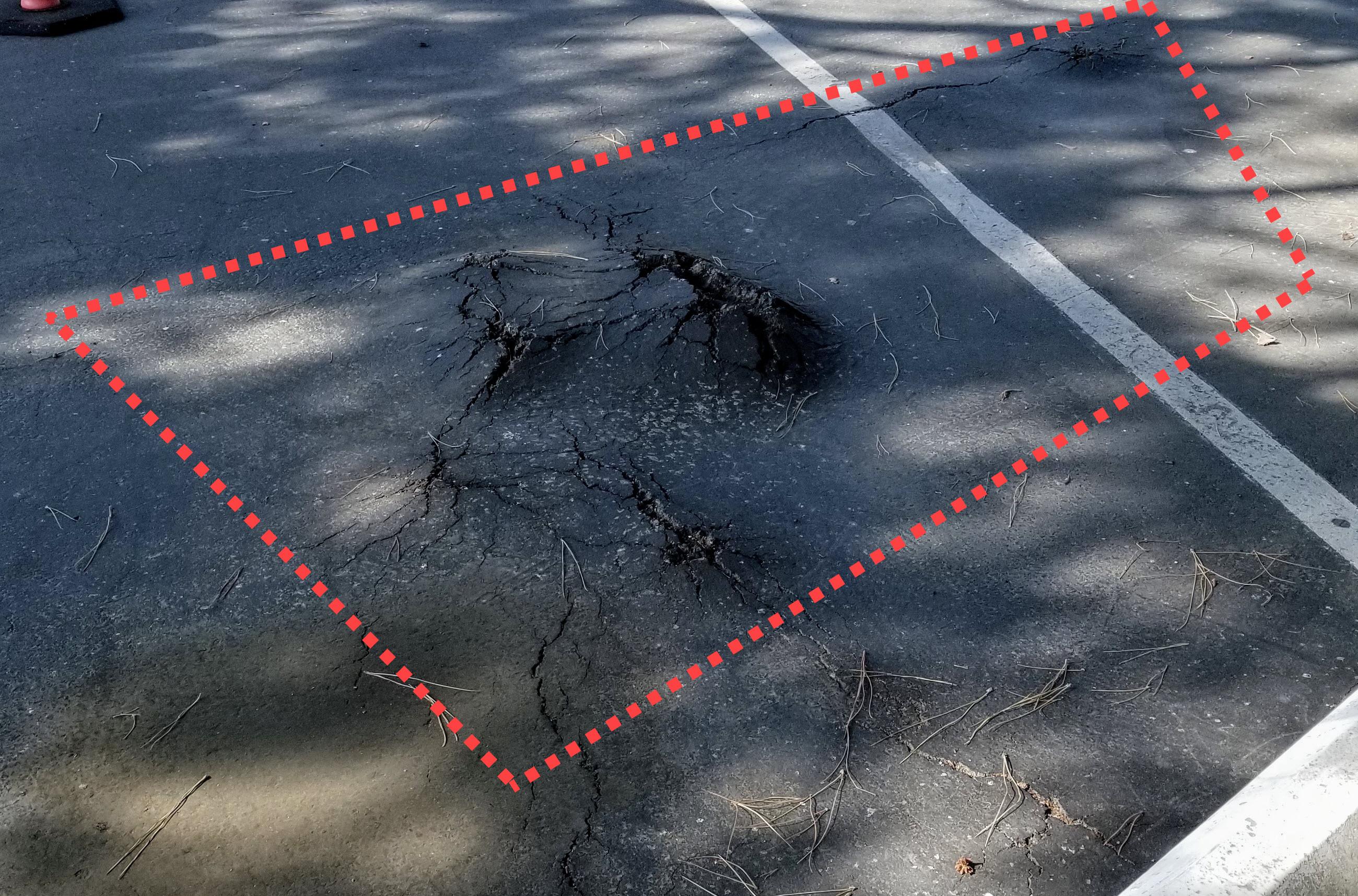 Roots in parking lots damaging asphalt